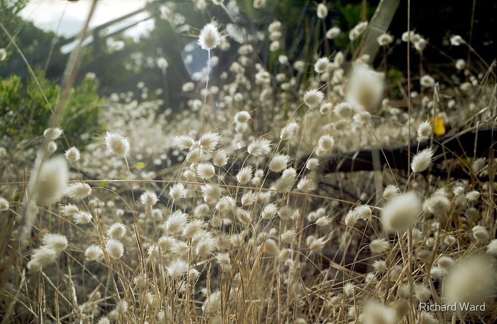 Summer Breeze by Richard Ward
