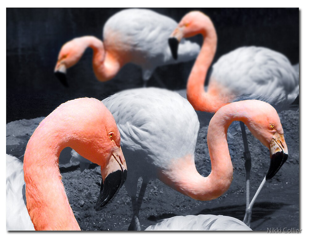 Flamingos by Nikki Collier
