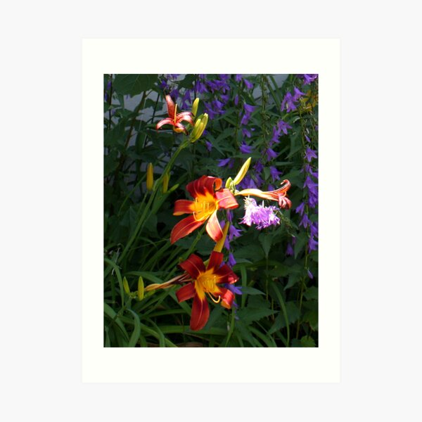 Daylilies in the Wildflowers Art Print