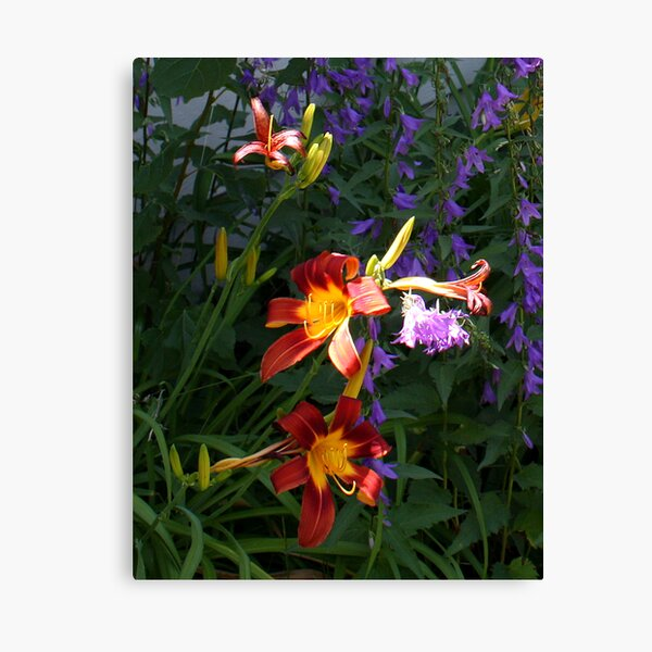 Daylilies in the Wildflowers Canvas Print