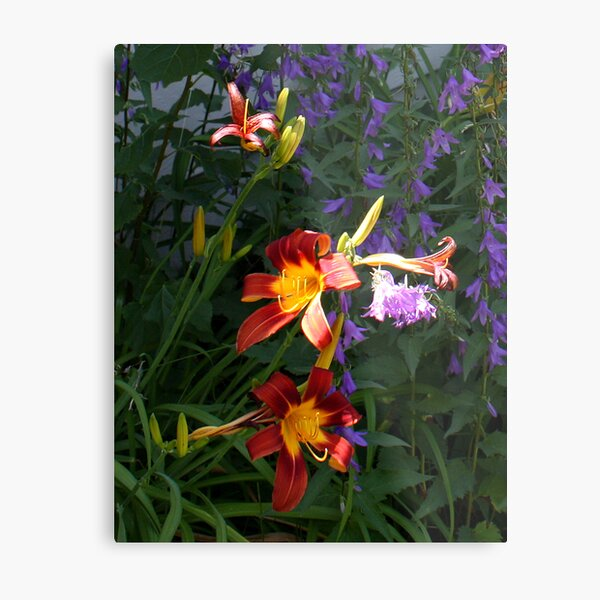 Daylilies in the Wildflowers Metal Print