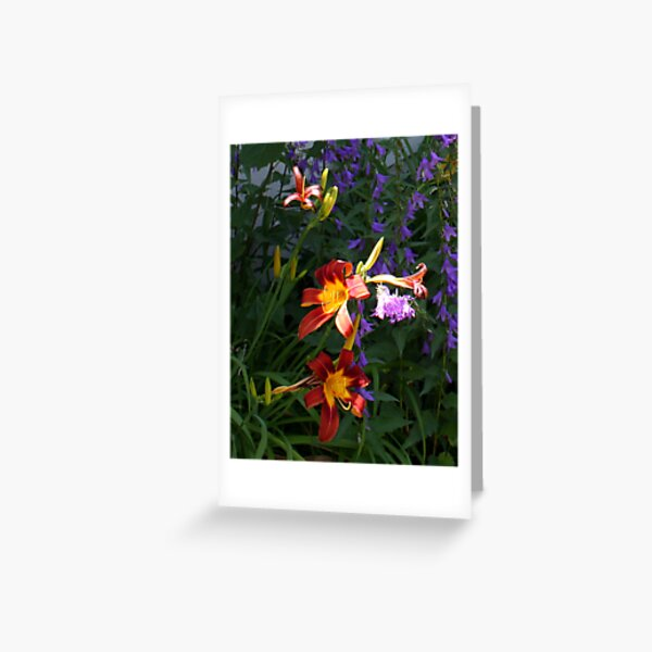 Daylilies in the Wildflowers Greeting Card