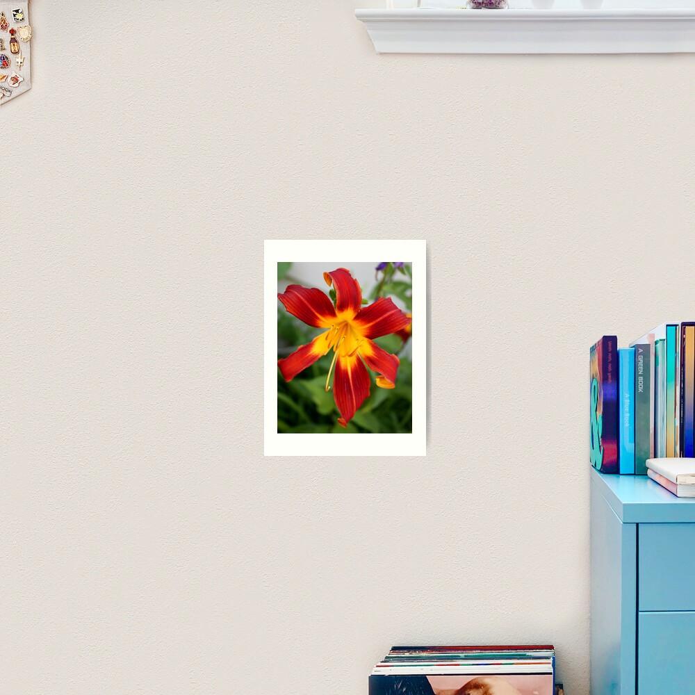 Red Daylily Art Print