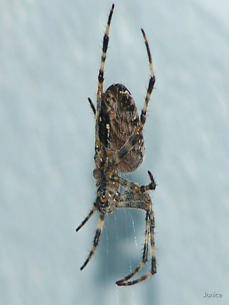 Downward Spider by Jonice