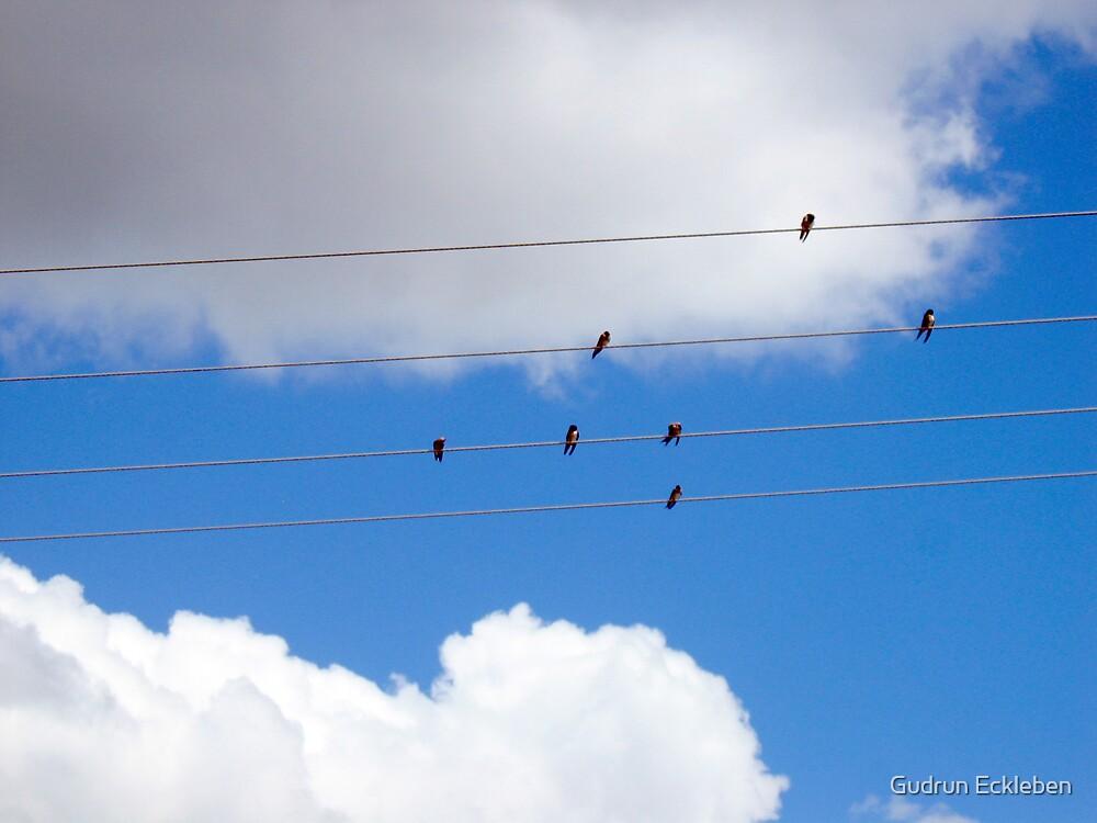 Birds on a Wire by Gudrun Eckleben