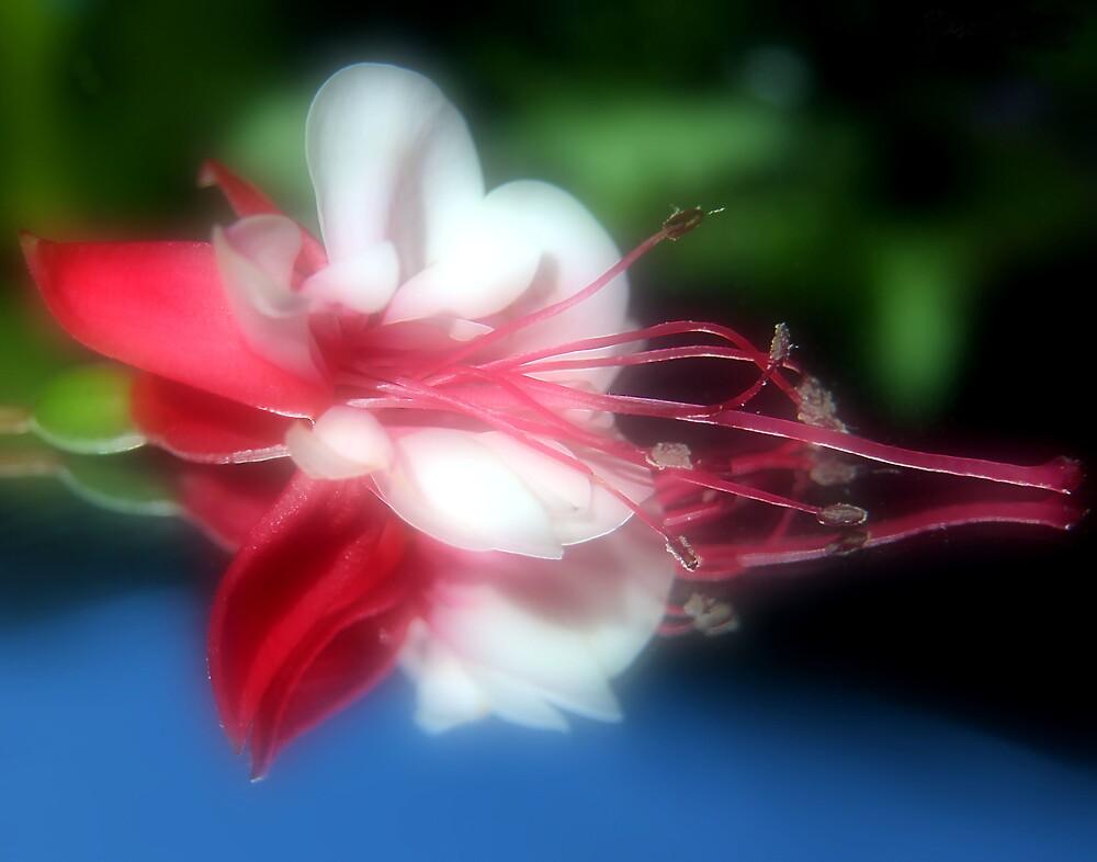 Glowing Fuchsia by Susan Gary