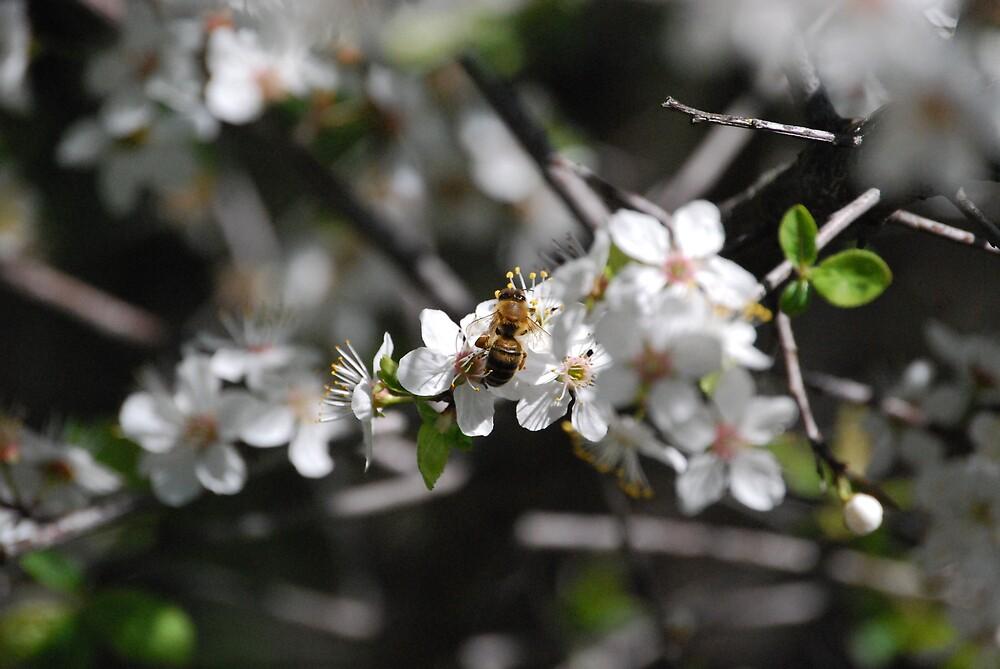 Pollenation by Princessbren2006