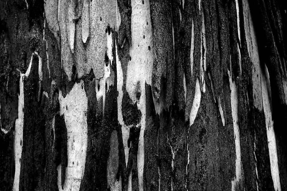 Bark by Benn Hartung