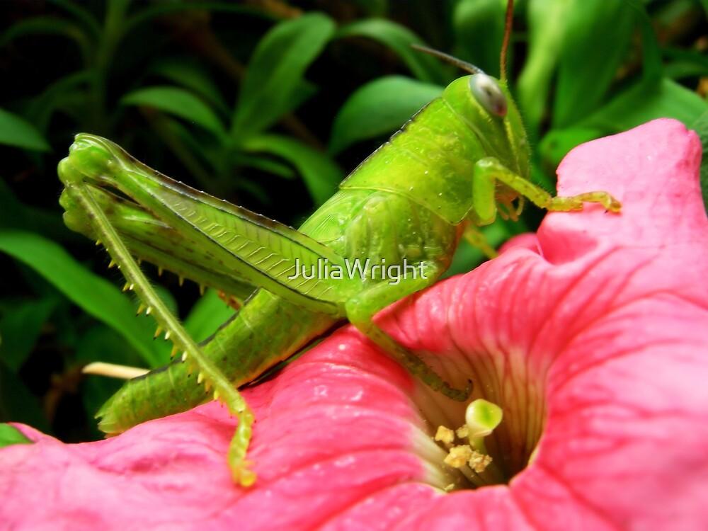 Grasshopper by JuliaWright