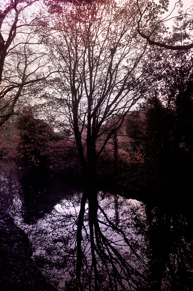 Dublin Autumn by TriggerHappy