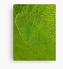 Leaf Scales Canvas Print