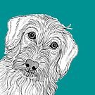 Wire Haired Dachshund Portrait by Adam Regester