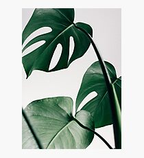 Monstera Leaves Photographic Print