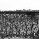Bridge legs by Jodi Webb