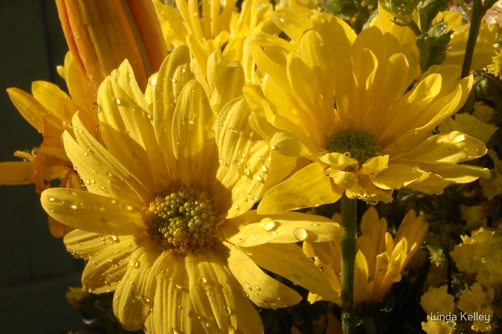 sunflower by Linda Kelley