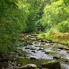 The River Twiss by Trevor Kersley