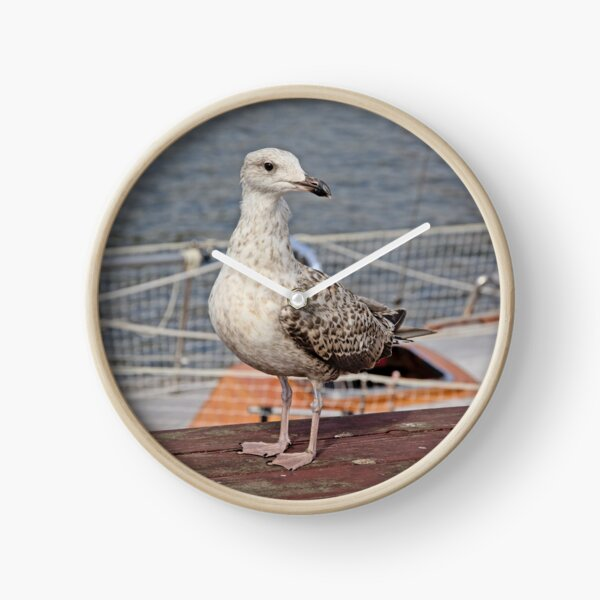 Seagull sitting on a sailboat Clock