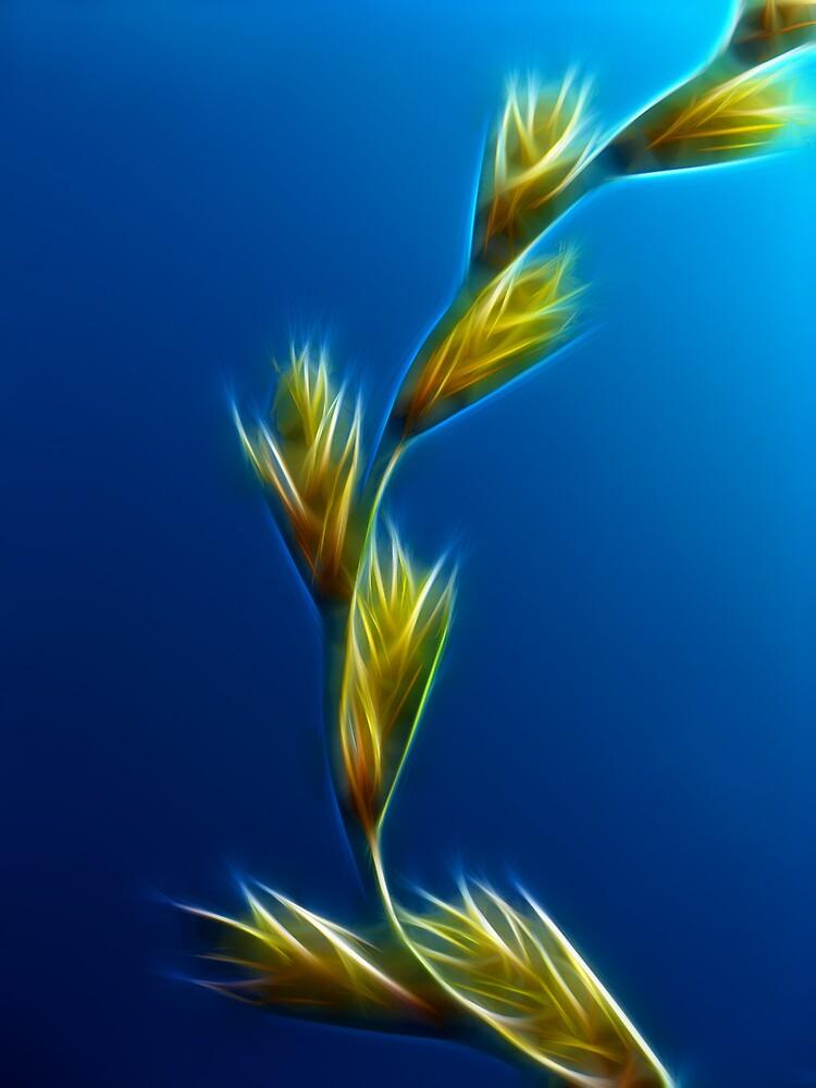 Glowing grass by SarahTrangmar