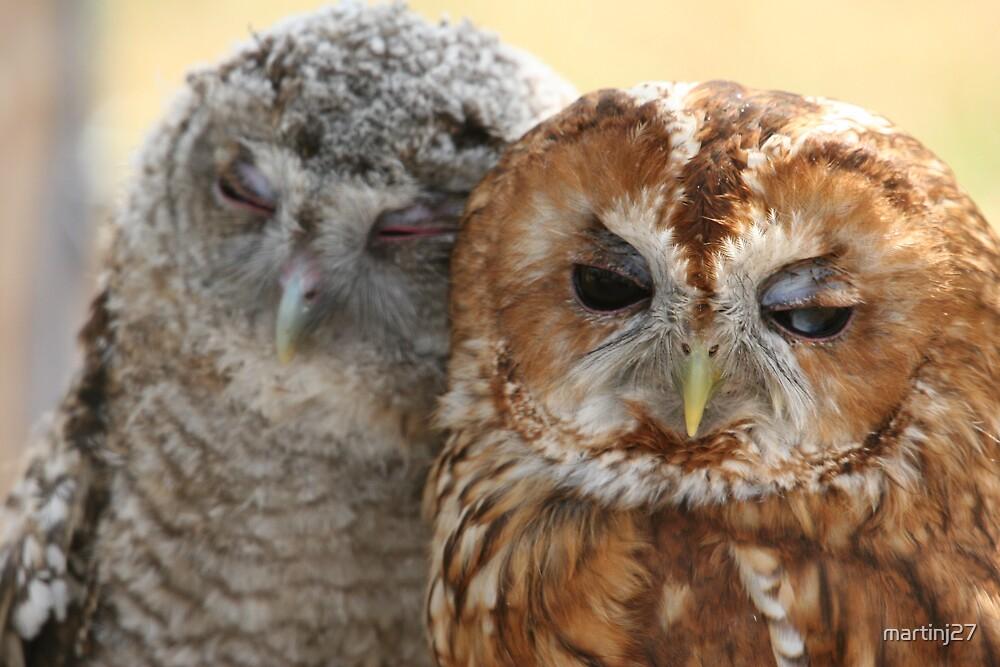 owls  by martinj27