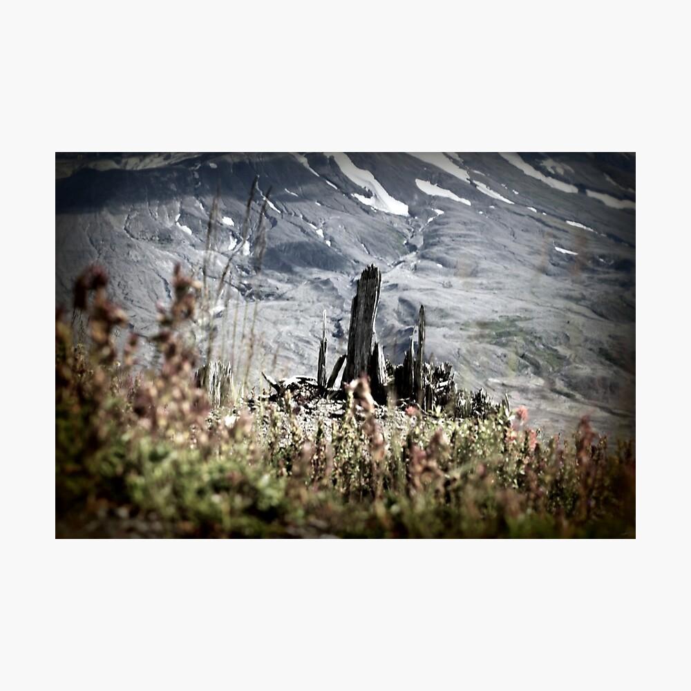 Shards of a tree, Johnston's Ridge Photographic Print