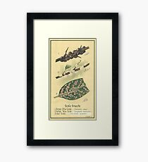 Scale Insects Framed Print