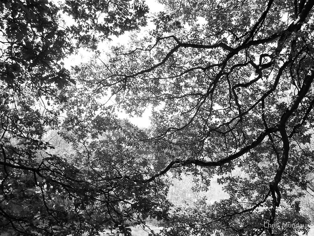 Oak curtain by Chris  Munday