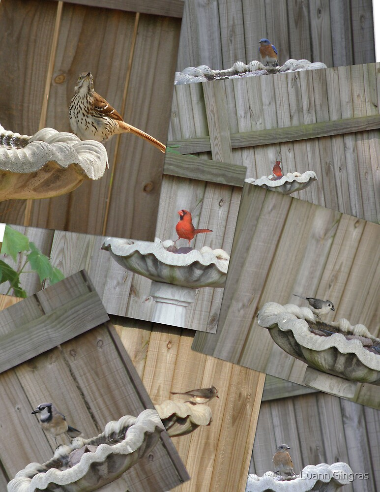 Birdbath Visitors by Luann Gingras