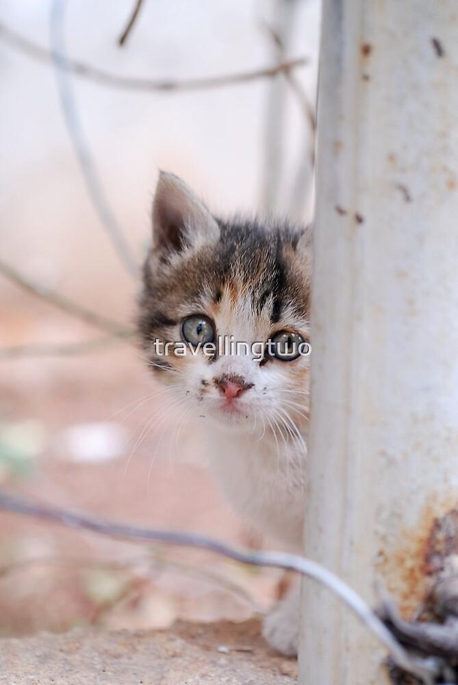 Syrian Street Kitten by travellingtwo