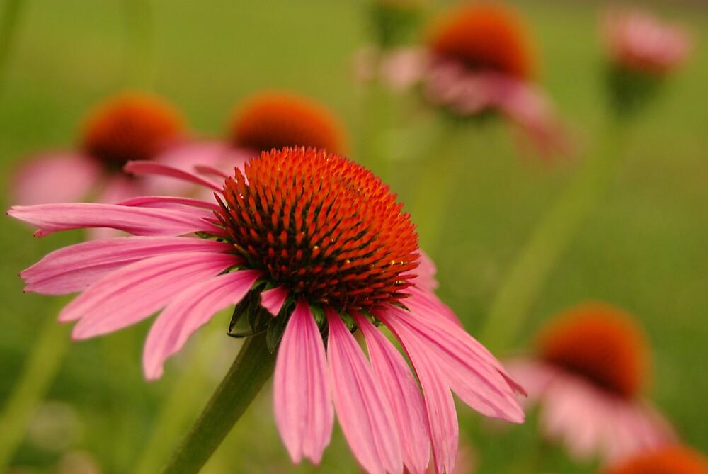 Field of Flowers by Jamie  Fox