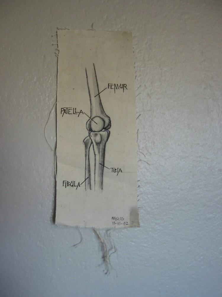 knee bones by m32ad
