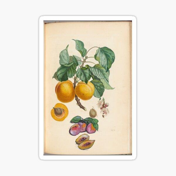 Sweet Fruit Sticker