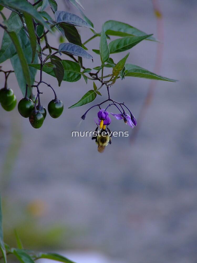 Nightshade  by murrstevens