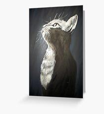 staring cat Greeting Card