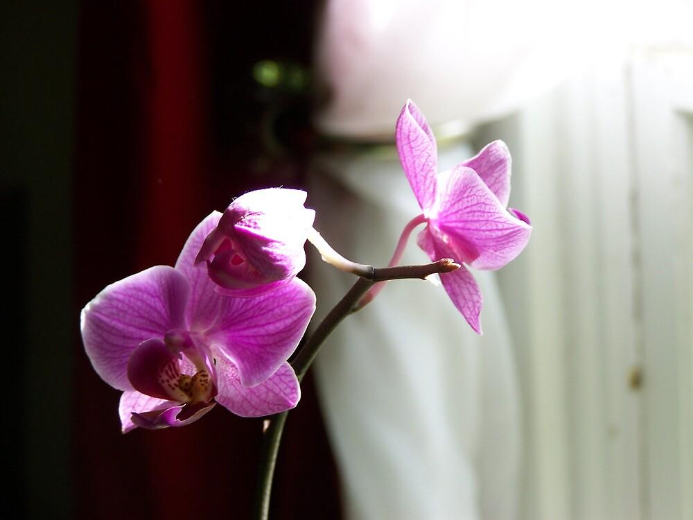 Glowing Orchid by Terileedav