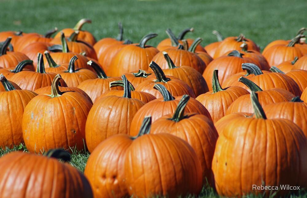Pumpkin Patch by Rebecca Wilcox
