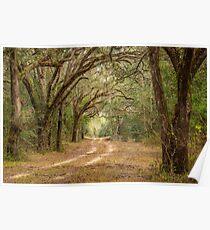 Dirt Road in Florida Poster