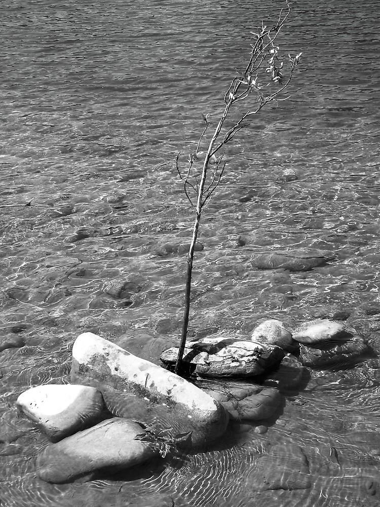 Tree branch in rock cluster by pamela11