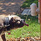Thirsty Dog by MellyV