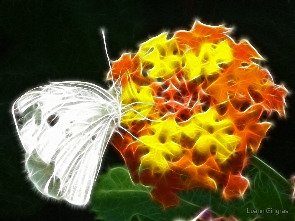 Cabbage White by Luann Gingras