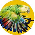 Blue Fronted Amazon Parrot  by Genchaii