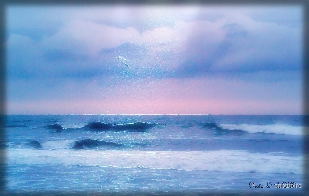 Ealy morning flight by snowbird