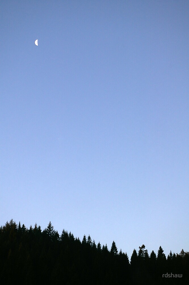 Moon and Pines by rdshaw
