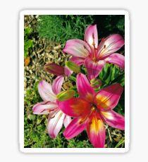 Community Garden Flowers Sticker