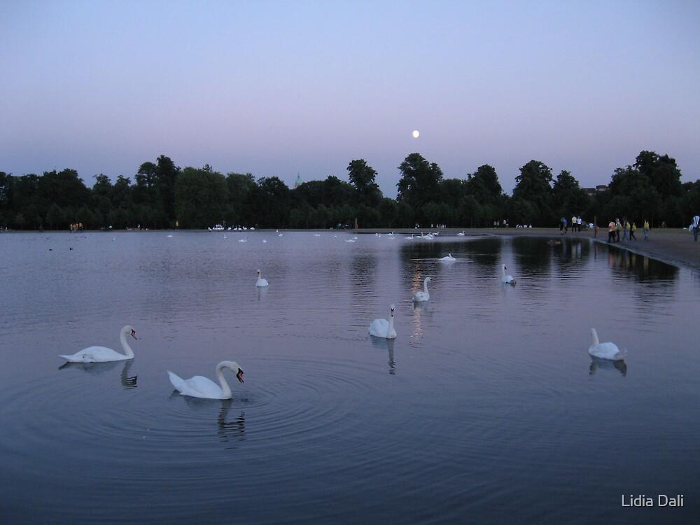 Swan Lake by Lidiya