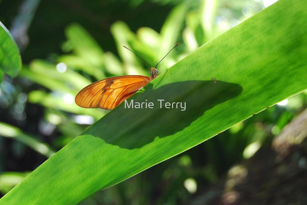 Peekaboo Butterfly by Marie Terry