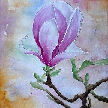 Magnolia by jenofuto