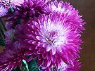 Purple Flower by G. David Chafin