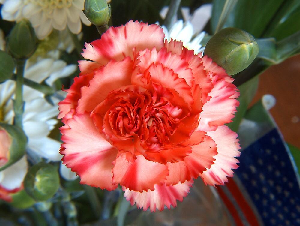 Carnation by G. David Chafin
