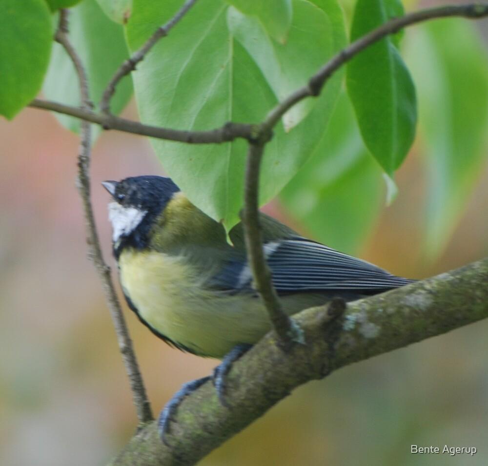 The birds in my garden by julie08