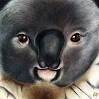Animalia: Koala by NoelleMBrooks